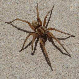 Уничтожение пауков в Ессентуках